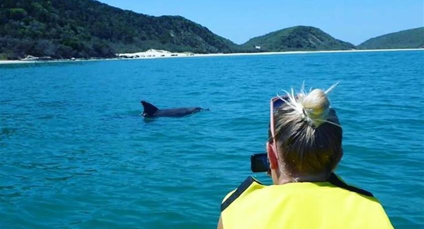 dolphin tiqy, Kayak con Vistas a Delfínes