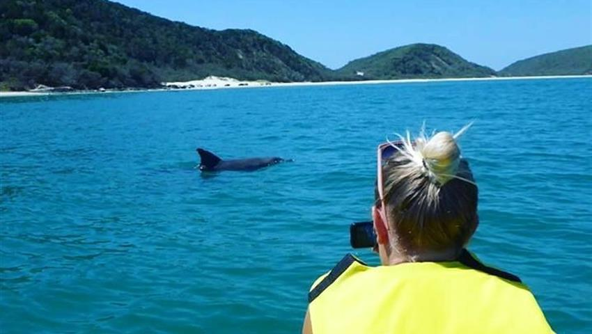 dolphin tiqy, Dolphin View Kayak