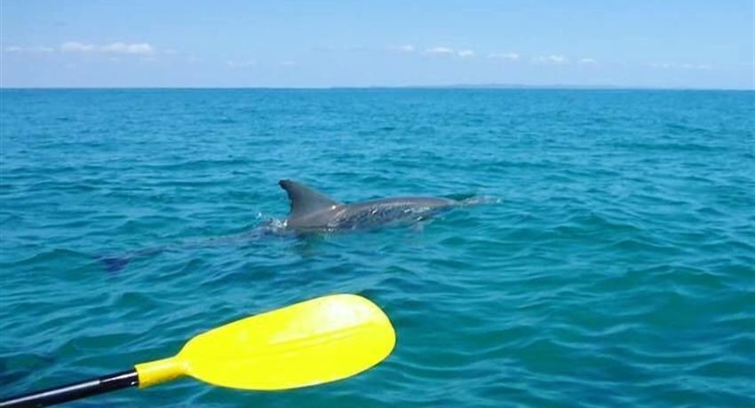 kayak tiqy, Kayak con Vistas a Delfínes