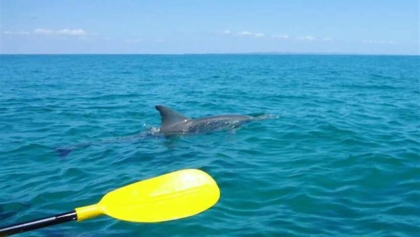 kayak tiqy, Dolphin View Kayak