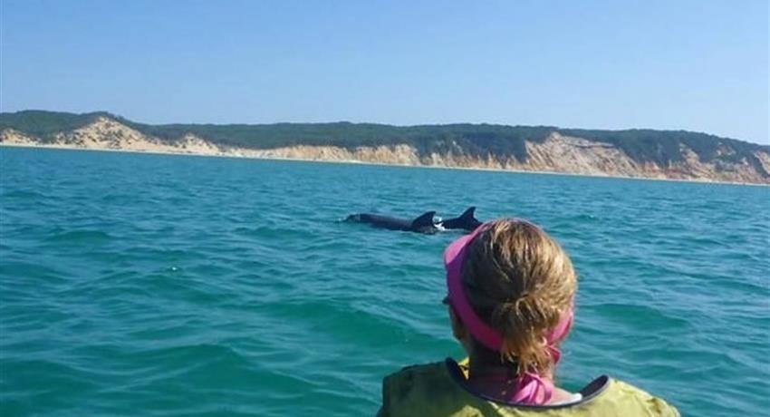 woman in kayak tiqy, Kayak con Vistas a Delfínes