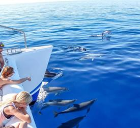 Dolphins and Whale Watching, Wildlife Expereinces in Madeira, Portugal