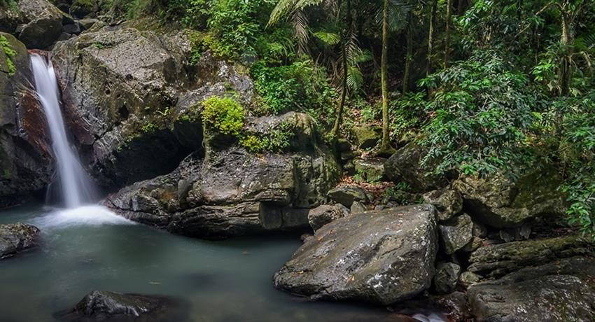 rainforest and bio bay combo waterfalls, El Yunque Rainforest And Kayaking Combo Tour