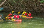 rainforest and bio bay combo mangroves, El Yunque Rainforest And Kayaking Combo Tour