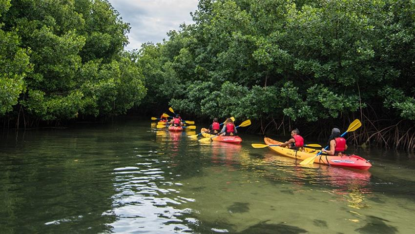 Bio Bay bioluminescent kayaking tour mangroves, Laguna Grande Bioluminescent Kayaking Tour