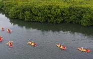 Bio Bay bioluminescent kayaking tour mangroves, Laguna Grande Bioluminescent Kayaking Tour