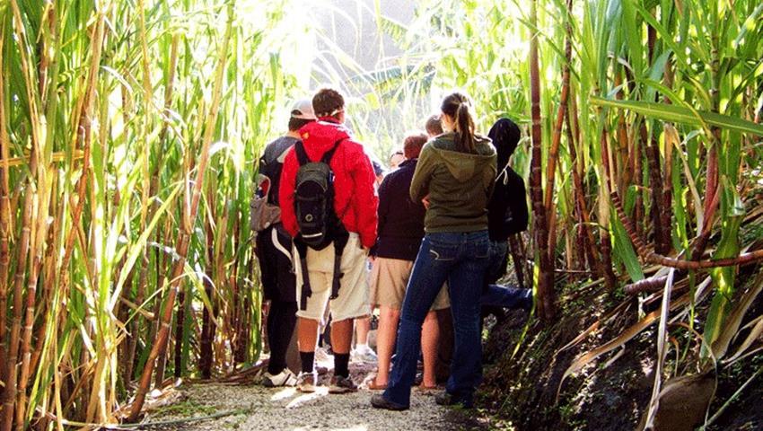 Sugar canes, El Trapiche 3-Hour Tour