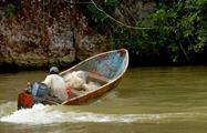 excursion los haitises boat driver, Excursion to the National Park Los Haitises