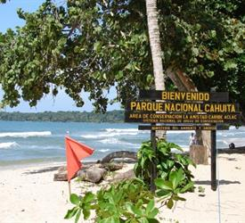 Cahuita Snorkeling and Rainforest Hike, Water Activities in Limon, Costa Rica