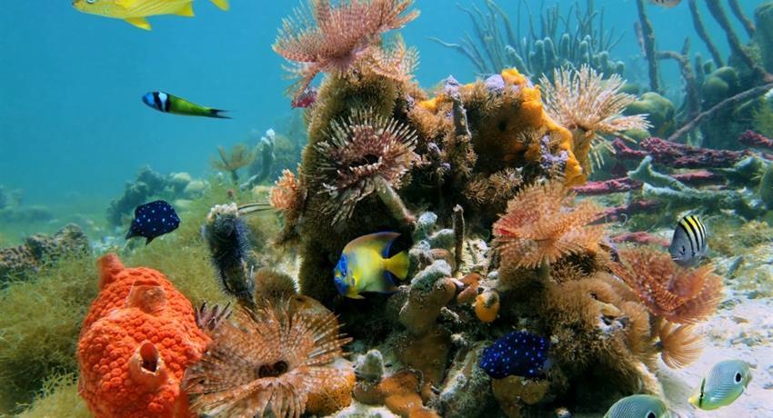 5, Cahuita Snorkeling and Rainforest Hike