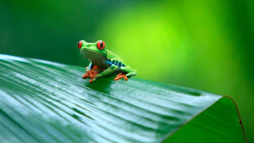 6, 2 Days Tortuguero Expeditions