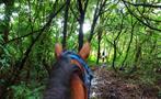 1, Farm Horseback Ride Tour