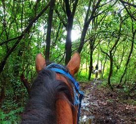 Paseo a Caballo en una Granja