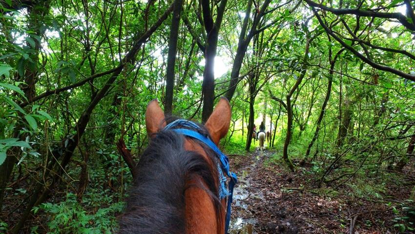 1, Farm Horseback Ride Tour