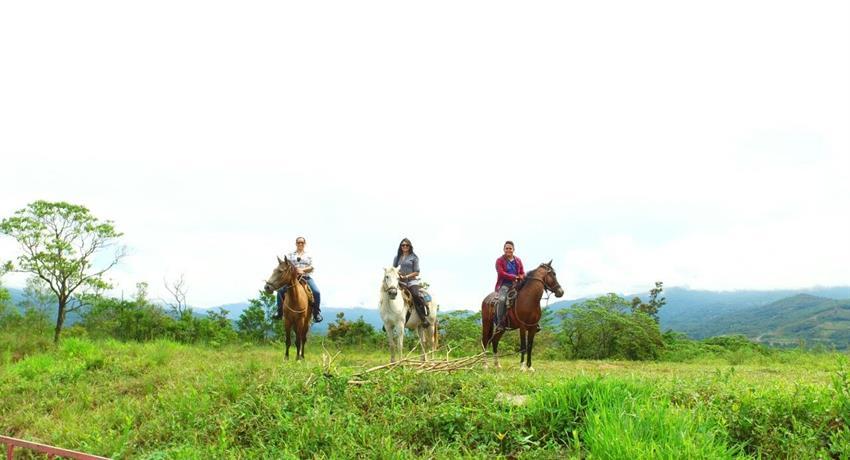 3, Farm Horseback Ride Tour