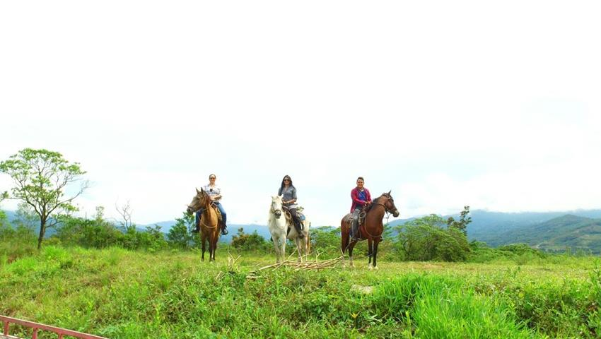 3, Farm Horseback Ride Tour