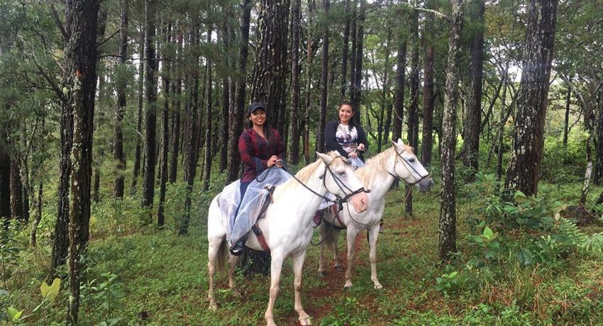 4, Farm Horseback Ride Tour