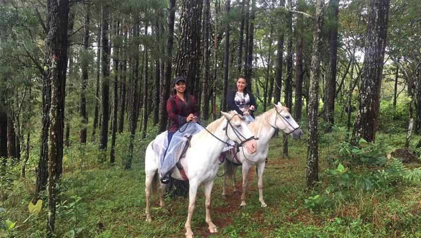 4, Farm Horseback Ride Tour