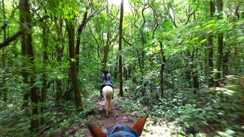 5, Farm Horseback Ride Tour