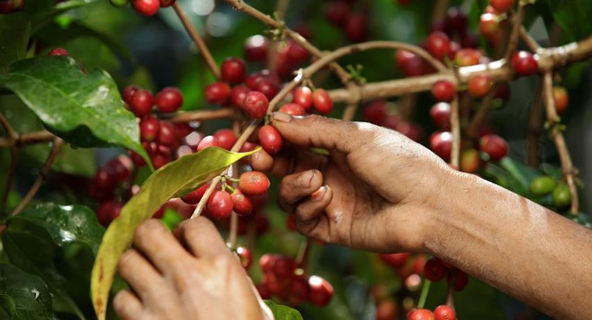 3, Coffee Farm Tour