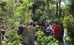 4, Coffee Farm Tour