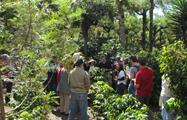 4, Coffee Farm Tour