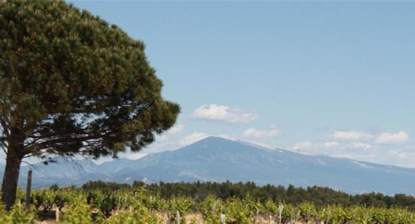 vineyard, Food and Wine Day Tour