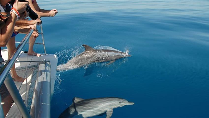 dolphin tiqy, Fraser Island Eco Sailing Adventure