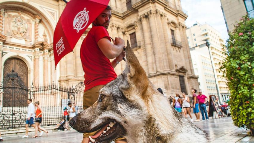 guide and a wolfdog - tiqy, Free Walking Tour in Malaga