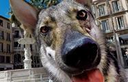 wolfdog in malaga - tiqy, Free Walking Tour in Malaga