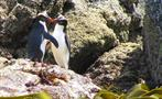 penguin tiqy, Full Day Land and Sea Bird Tour