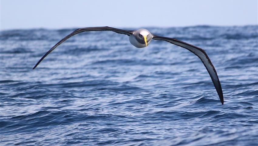bird flying tiqy, Full Day Land and Sea Bird Tour