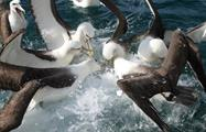 bird in water tiqy, Full Day Land and Sea Bird Tour