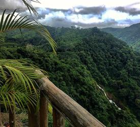 Full Day Safari at Carara National Park and Tarcoles River