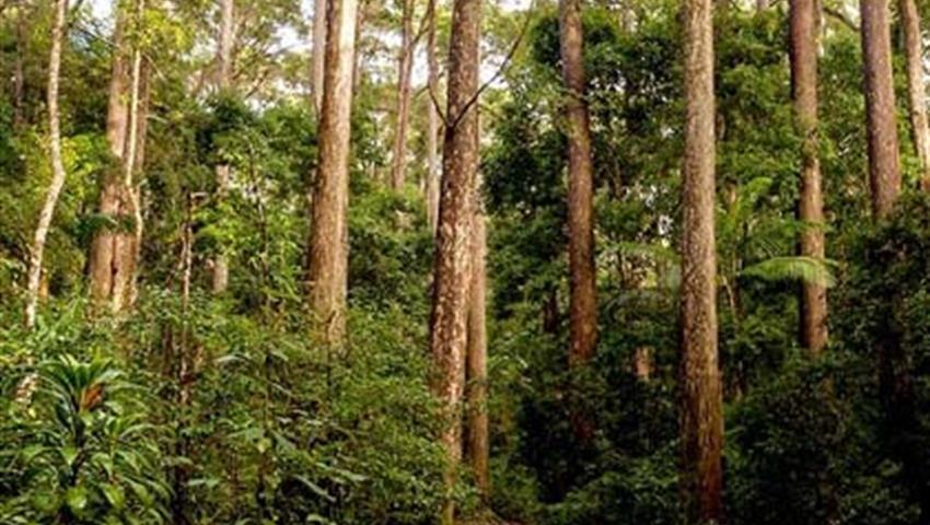 rainforest tiqy, Recorrido de Día Completo