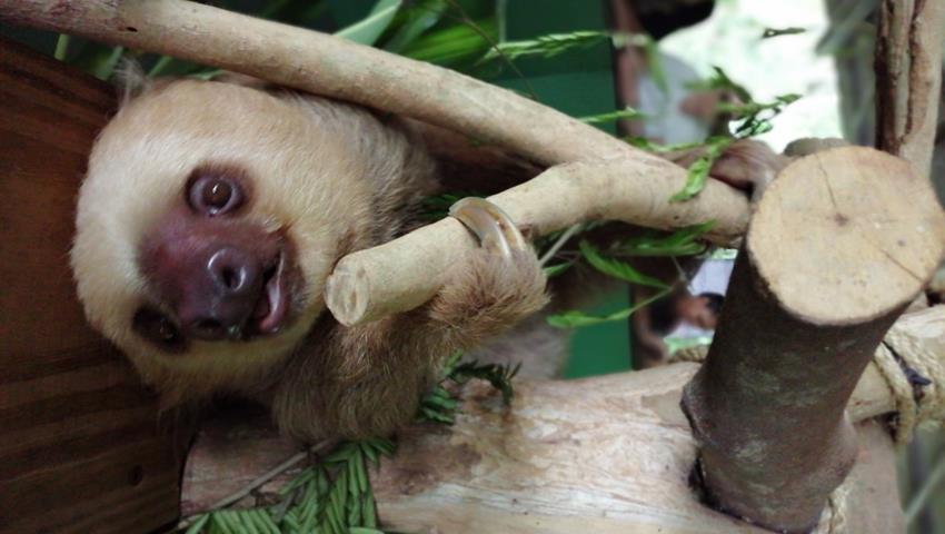 sloth sanctuary, santuario de perezosos Panama, Gamboa Day Tour