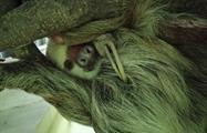 Santuario de perezosos Gamboa Sloth Sanctuary, Gamboa Day Tour