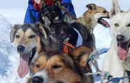 Dog Lovers, Great Divide Dog Sled Tour