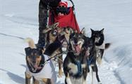 Snow Adventures, Great Divide Dog Sled Tour