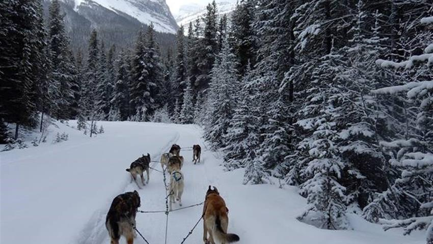 Let's start the tour, Great Divide Dog Sled Tour