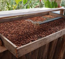 Doka State Coffee Tour, Grecia and Sarchi Oxcarts - Private Tour, Coffee Tours in Costa Rica