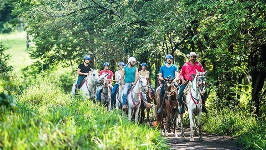Horses, Guanacaste Horseback Riding 6 Hour Tour