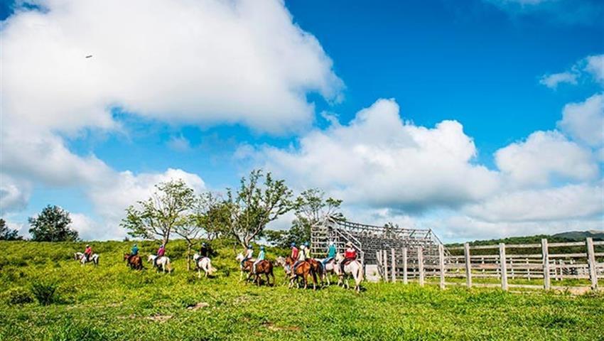 Horses, 6 Horas de Paseo a Caballo en Guanacaste