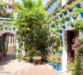 Guided Walking Tour to the Patios of Córdoba