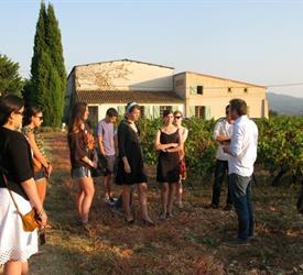 Half Day Wine Tour of Côtes de Provence Sainte-Victoire
