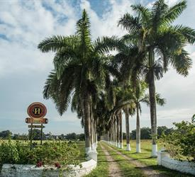 Distillery Rum Tour, Food And Drink Tours in Jamaica