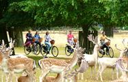 Hampton Bike Tour Royal Park, Hampton Bike Tour
