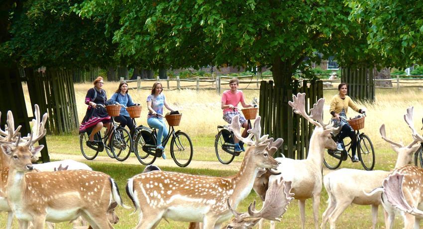 Hampton Bike Tour Royal Park, Hampton Bike Tour