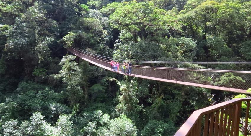 4, 8 Hanging Bridges Tour