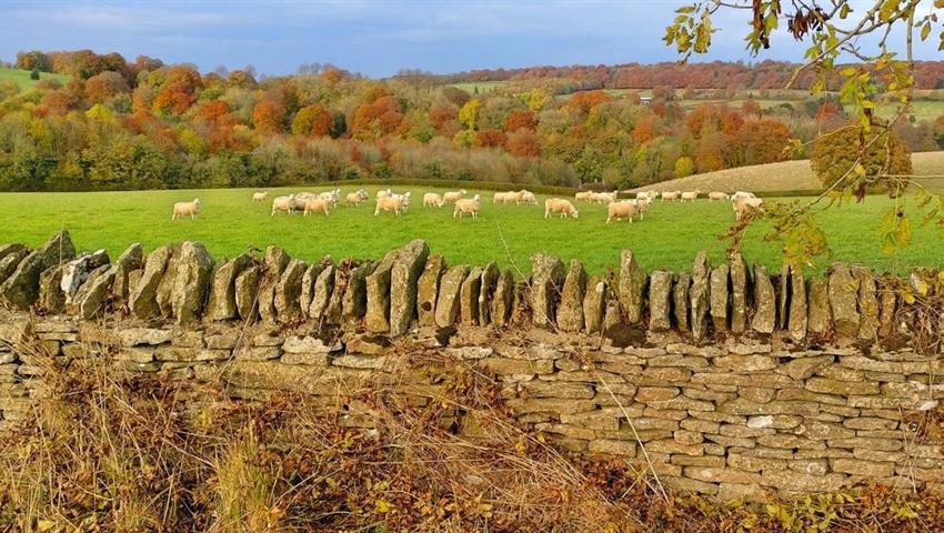 Hidden Cotswolds - Tiqy, Hidden Cotswolds: Past Glories and Forgotten Stories
